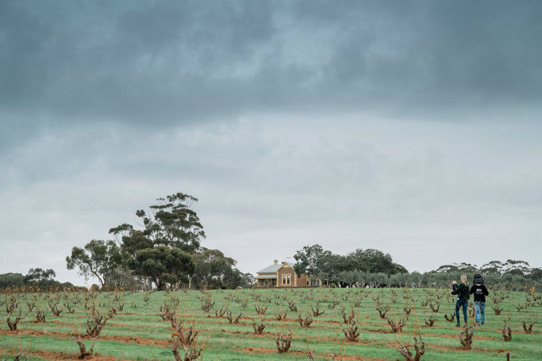 Shanahans Wines - Barossa Valley